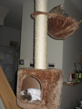 猫タワー2匹.jpeg